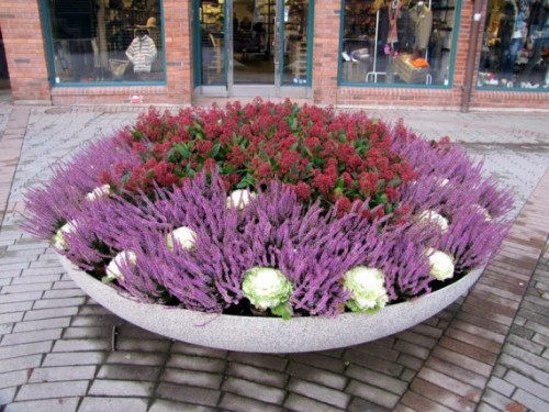 технология посадки цветов